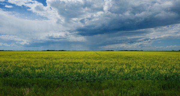 Une Semaine Compliquée Au Manitoba